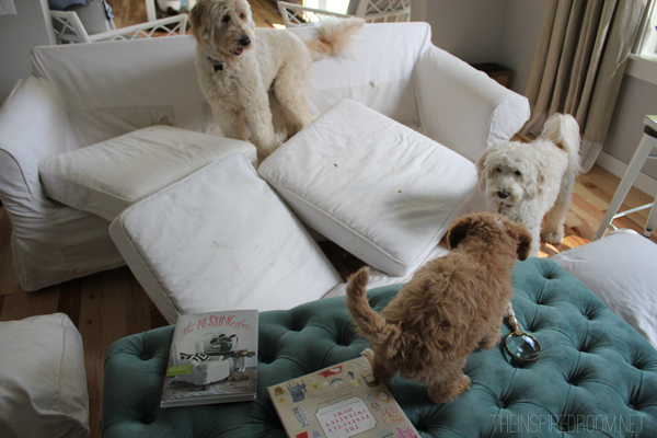 Marvelous Living With Messy Cats And Dogs A Slipcover Story Pt 1 Pdpeps Interior Chair Design Pdpepsorg