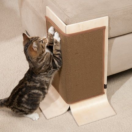 How to keep cats away from your sofa - Sofas para gatos ...