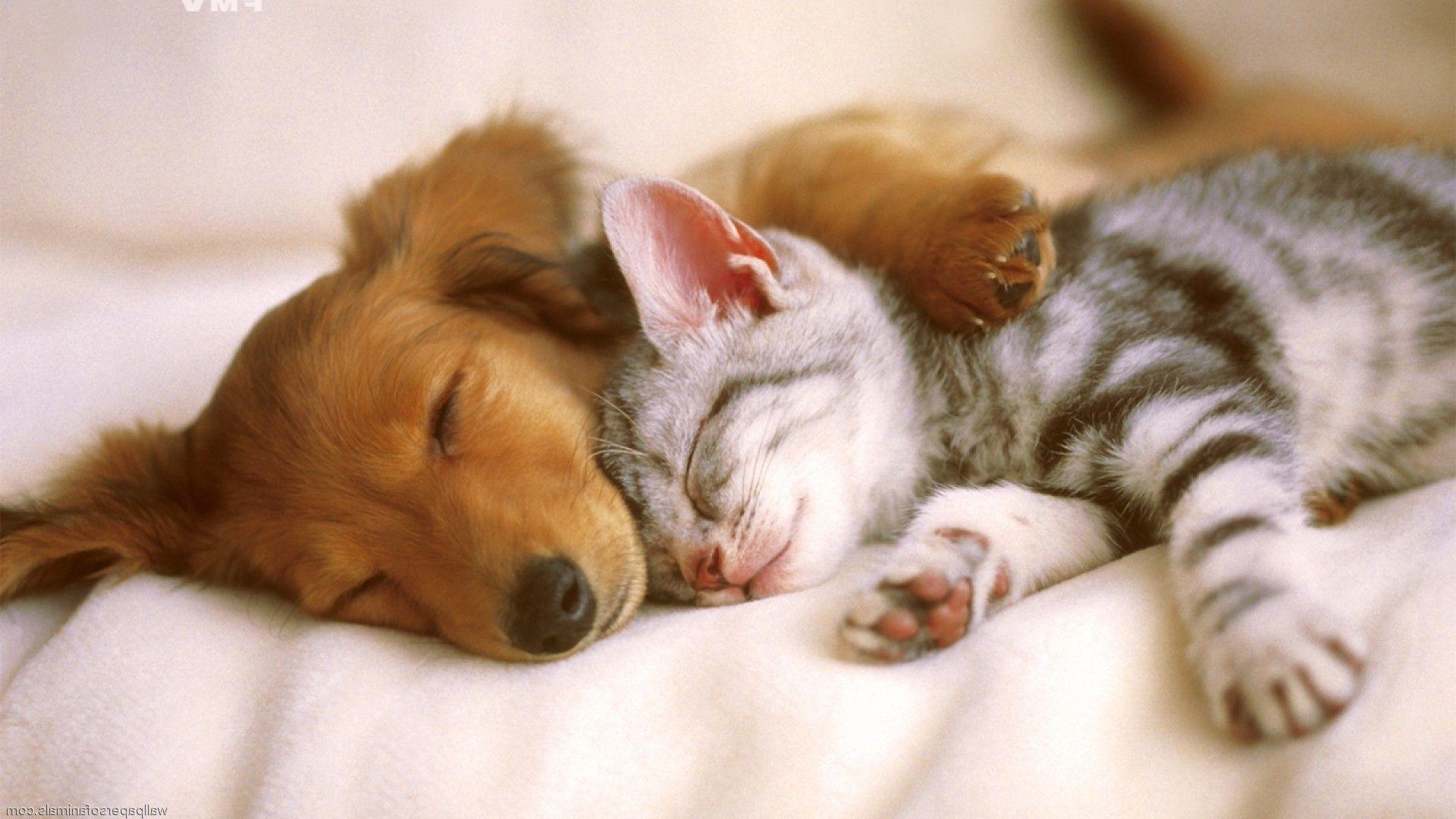 ペットの爪とぎに強いソファカバーでペットと一緒にくつろごう