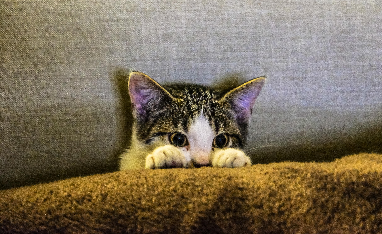 Katze versteckt im Sofa
