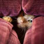 Pets Don't Belong On A Sofa, Here's Why