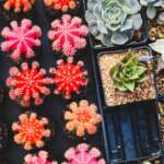 5 Indoor Plants That Need The Least Maintenance