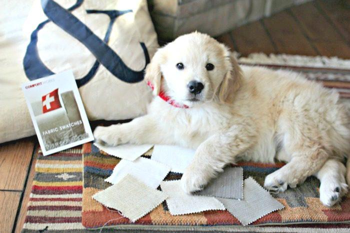 telas para fundas de sofá y perrito