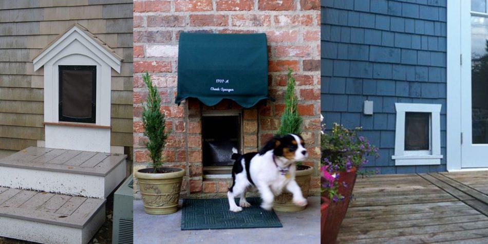 Pet entrances inspiration