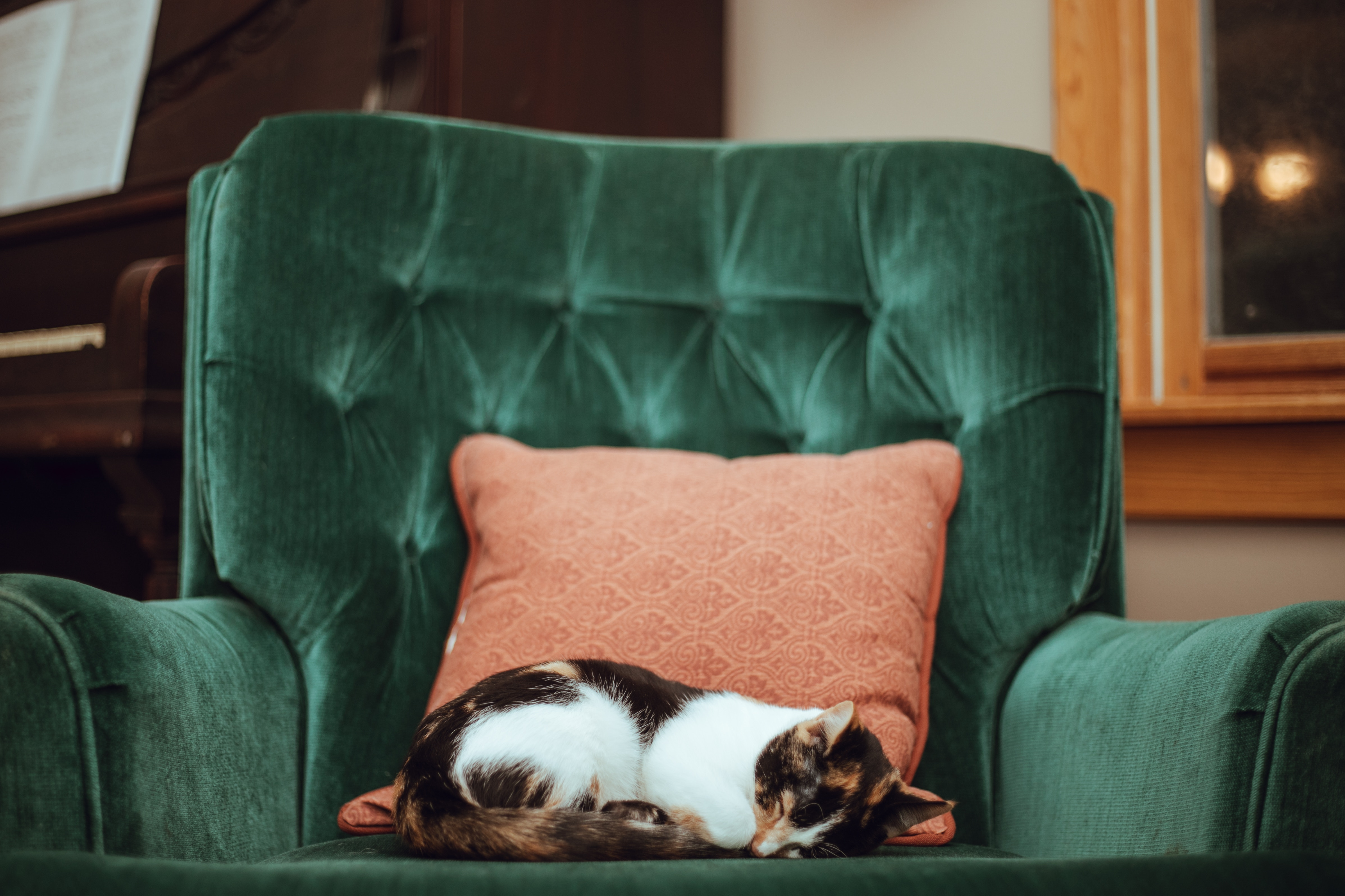 Is that your armchair or your cat's?