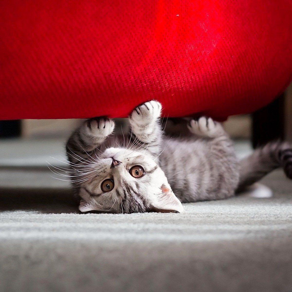 So kannst du deine Katze von dem Sofa fernhalten