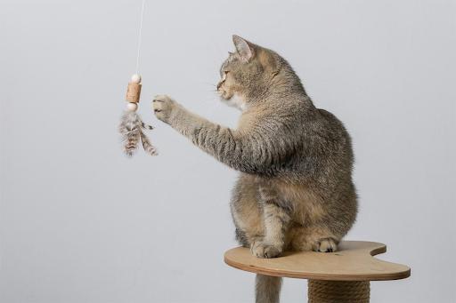 cat on cat proof jungle jim