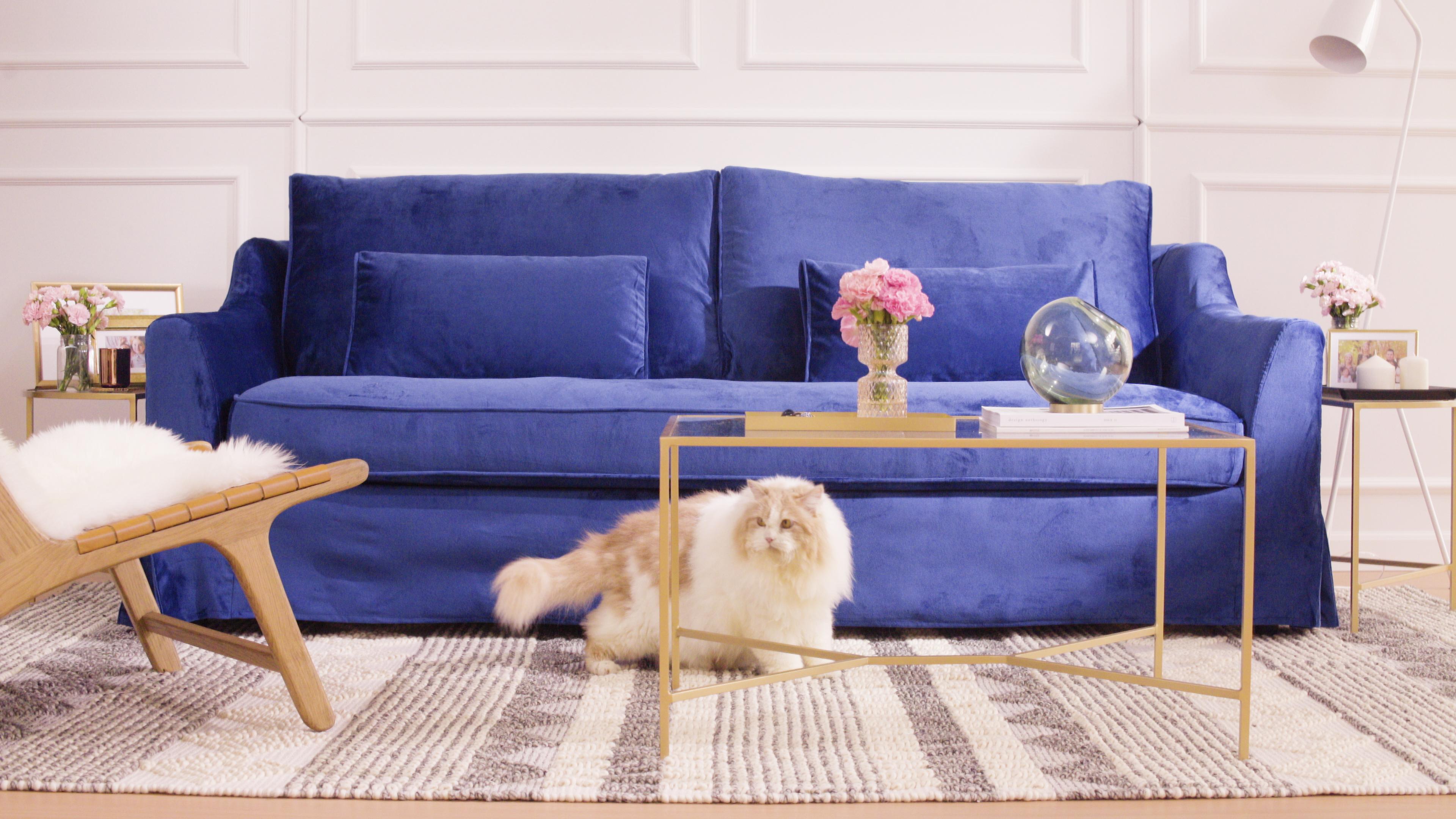 fat cat avoiding sofa with blue velvet slipcover
