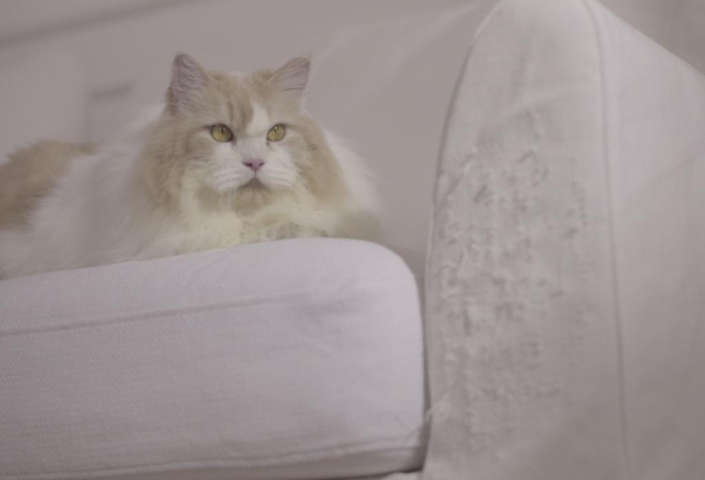 お子さんやペットがいるお家に最適のソファ生地(猫)