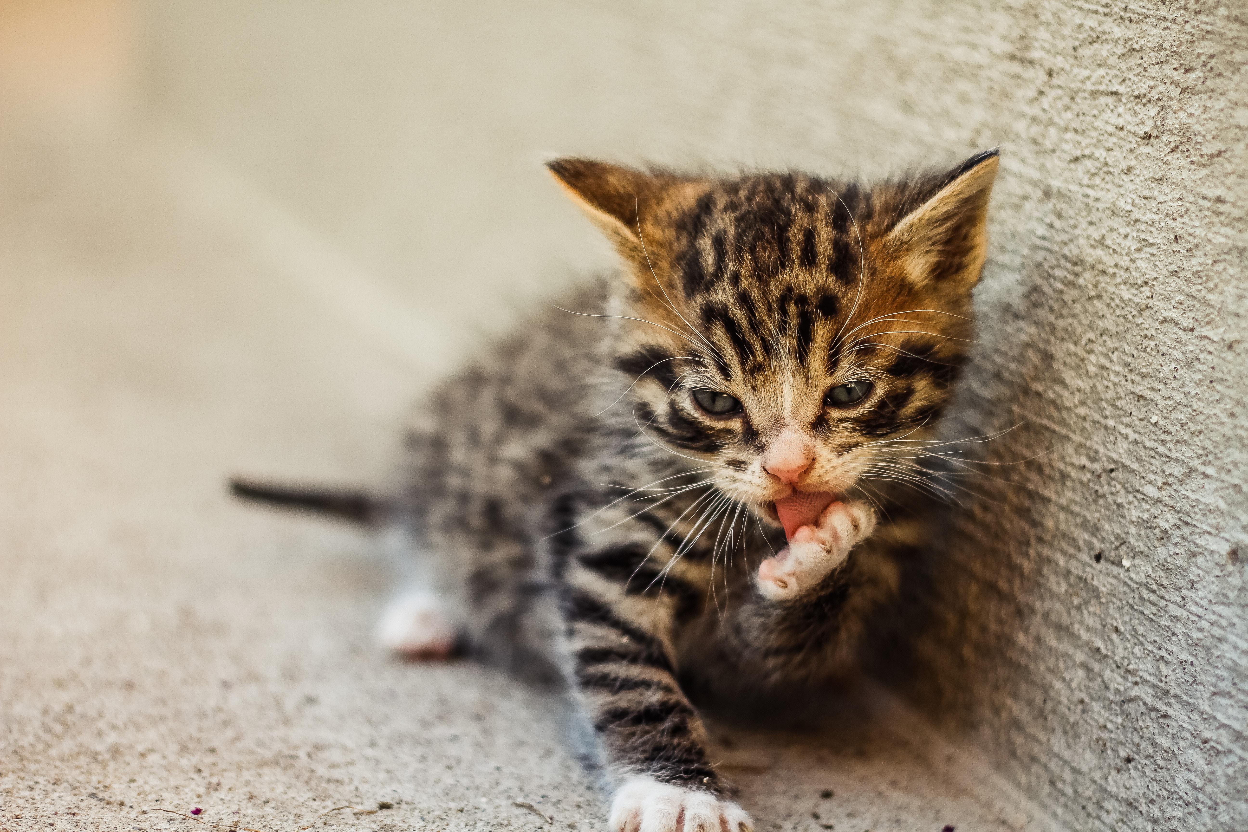 Warum Katzen Möbel zerstören und wie du sie dazu bringst, aufzuhören!