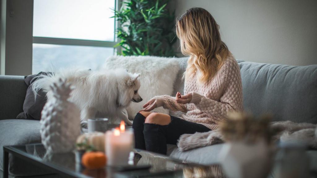 犬の飼い主が知っておくべき素晴らしい知恵6つ