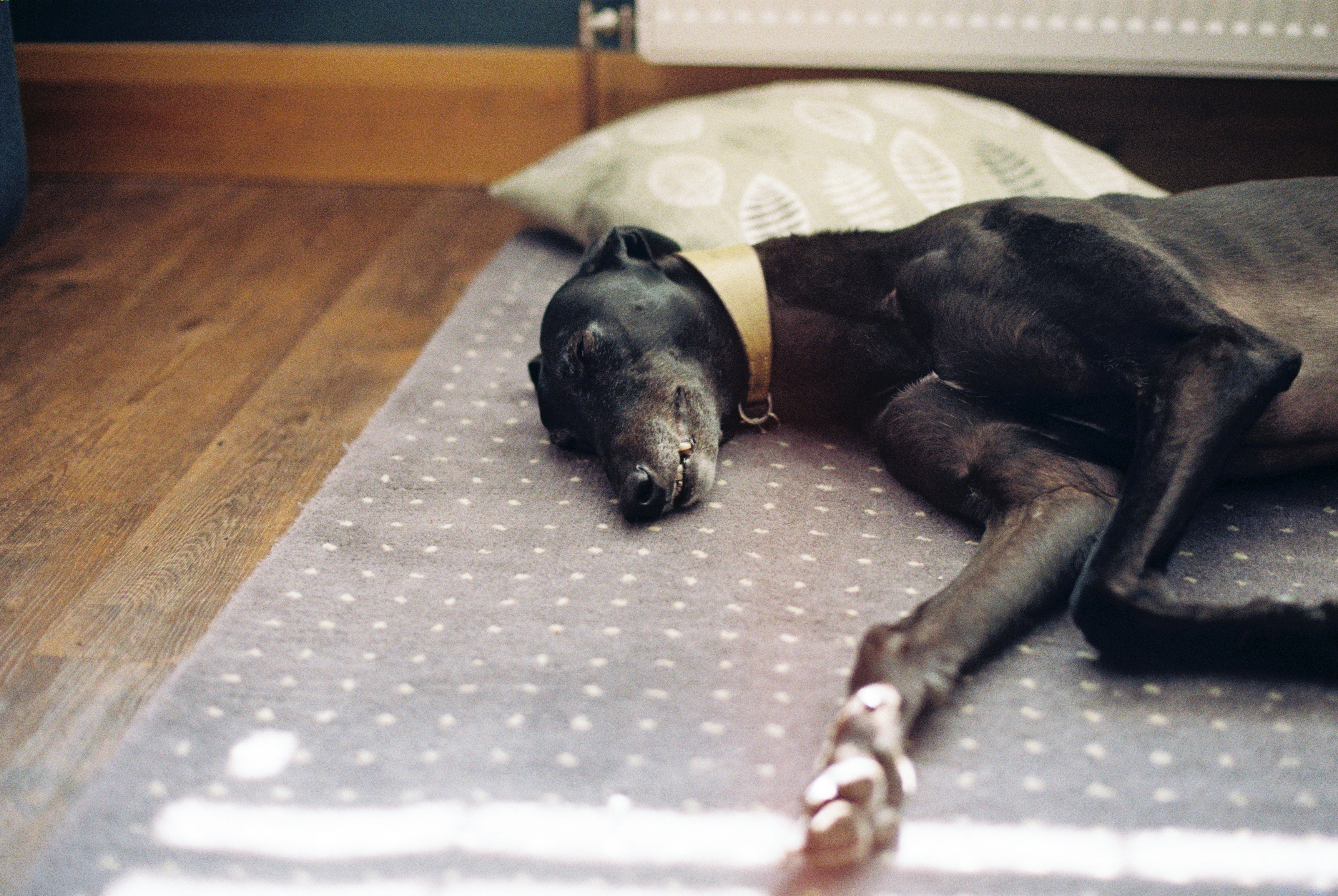 6 IKEA Hacks Every Dog Owner Should Know About