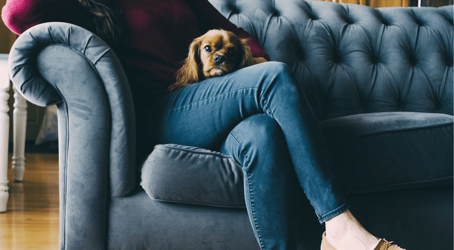 Get Rid Of Stubborn Pet Odours From Your Sofa With These Simple Tricks