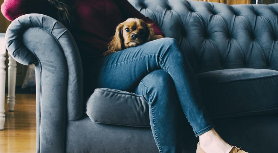 So bekommst du unangenehme Gerüche von deinen Haustieren aus dem Sofa