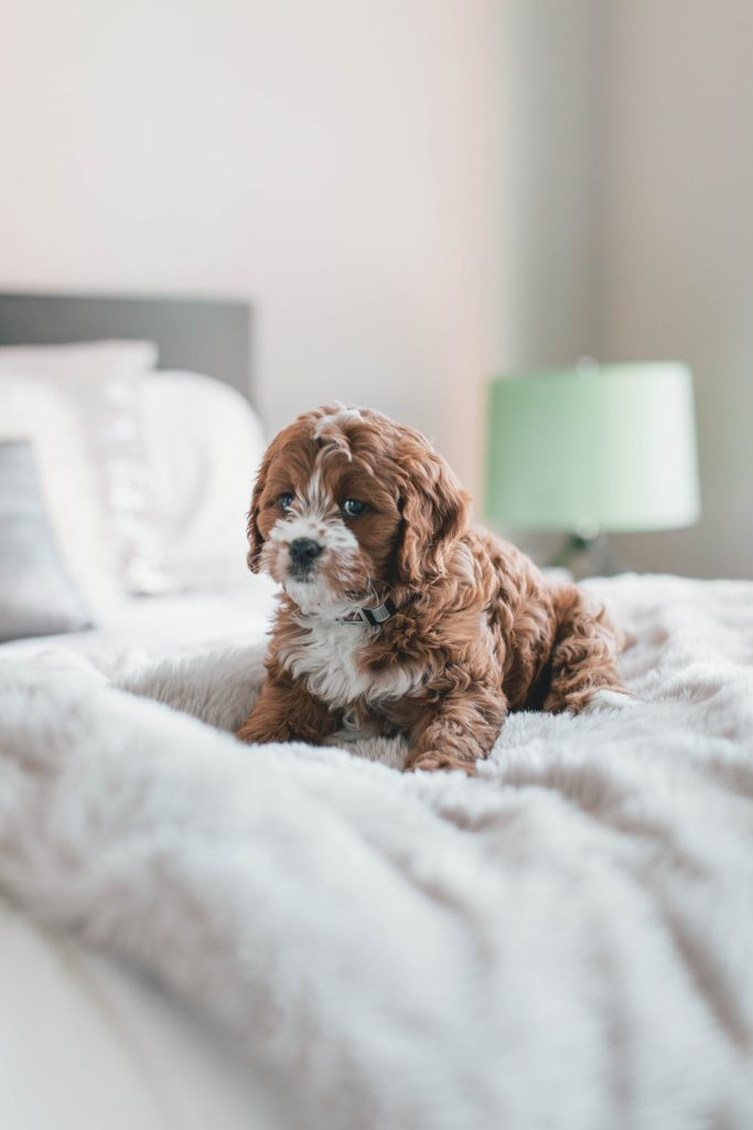 How to keep your home clean with a new puppy