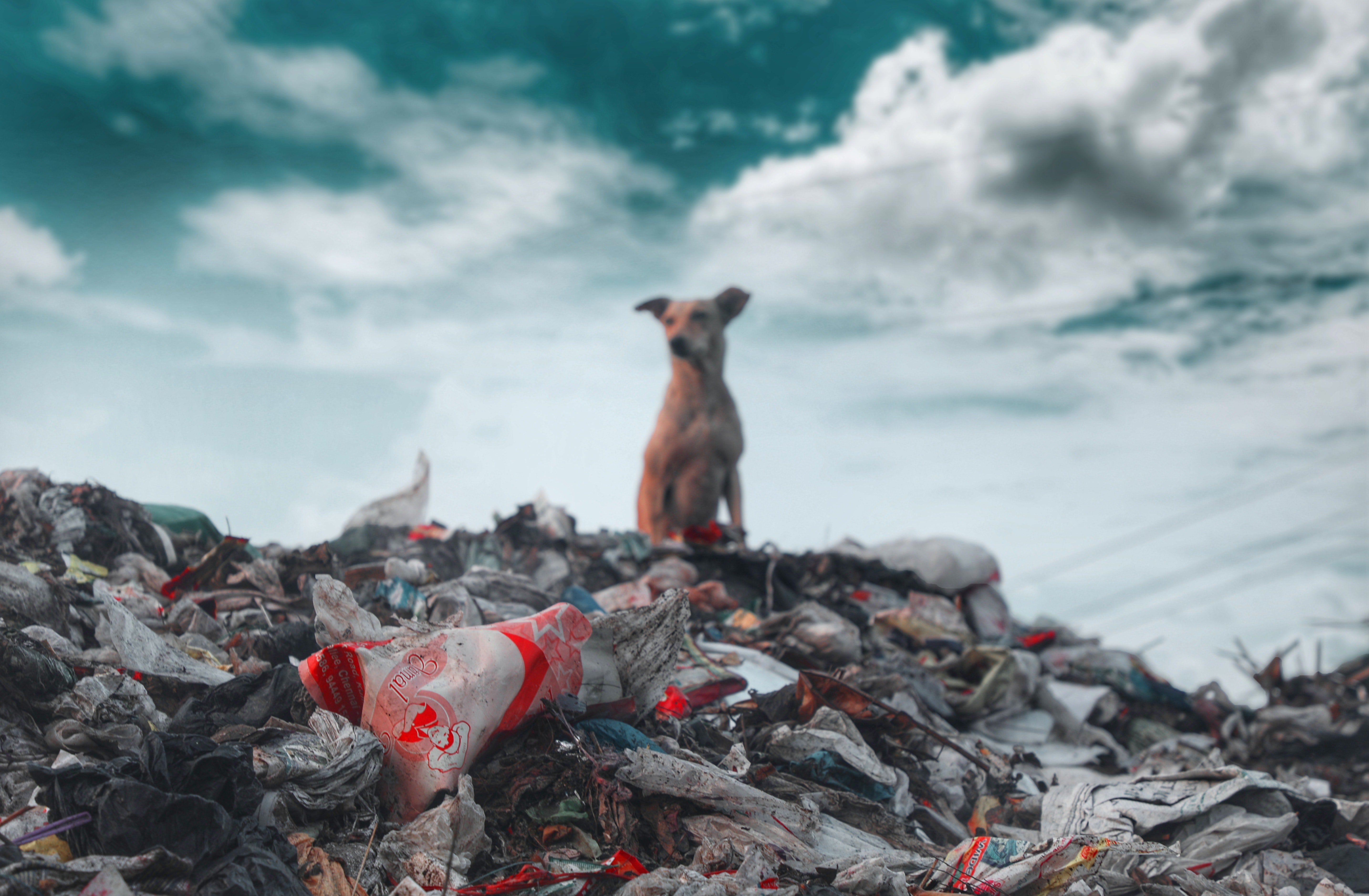 The Zero Waste Lifestyle What It Is, and How It Can Make Your Life Better