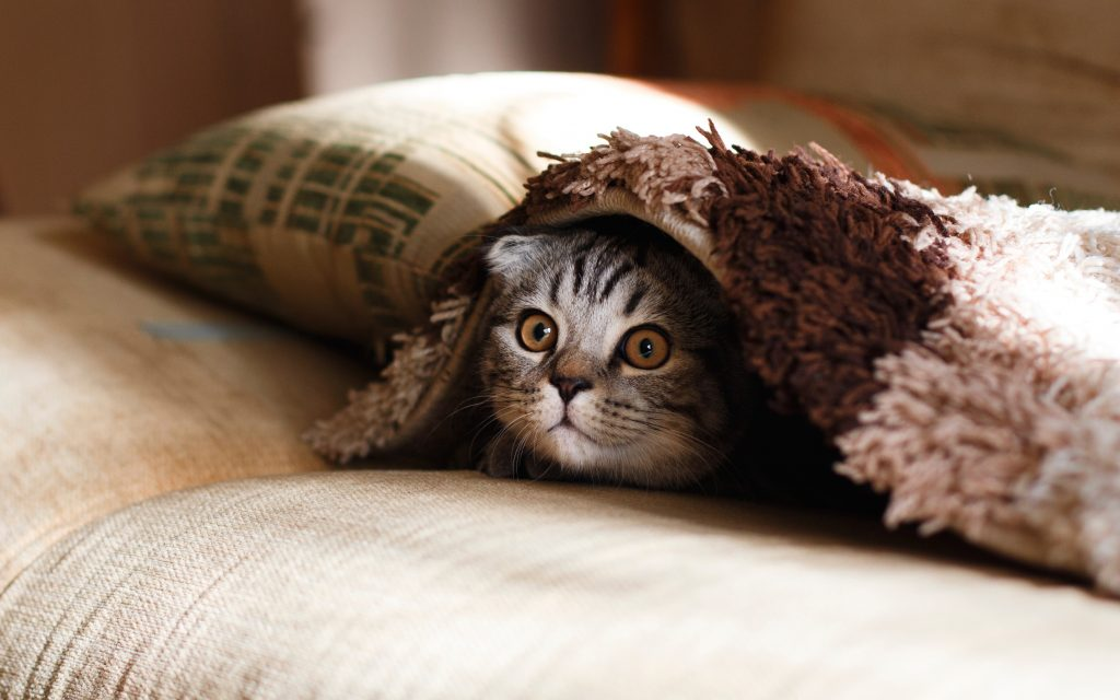 How To Keep Your Home Clean With A New Kitten