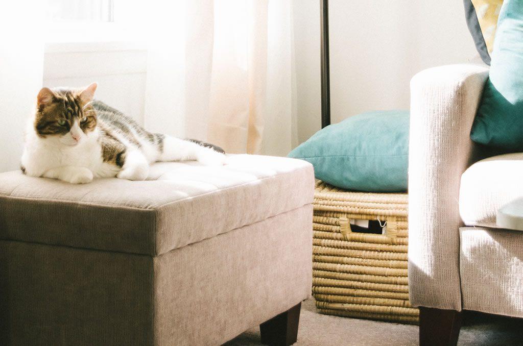Comment éviter que votre chat abîme vos meubles
