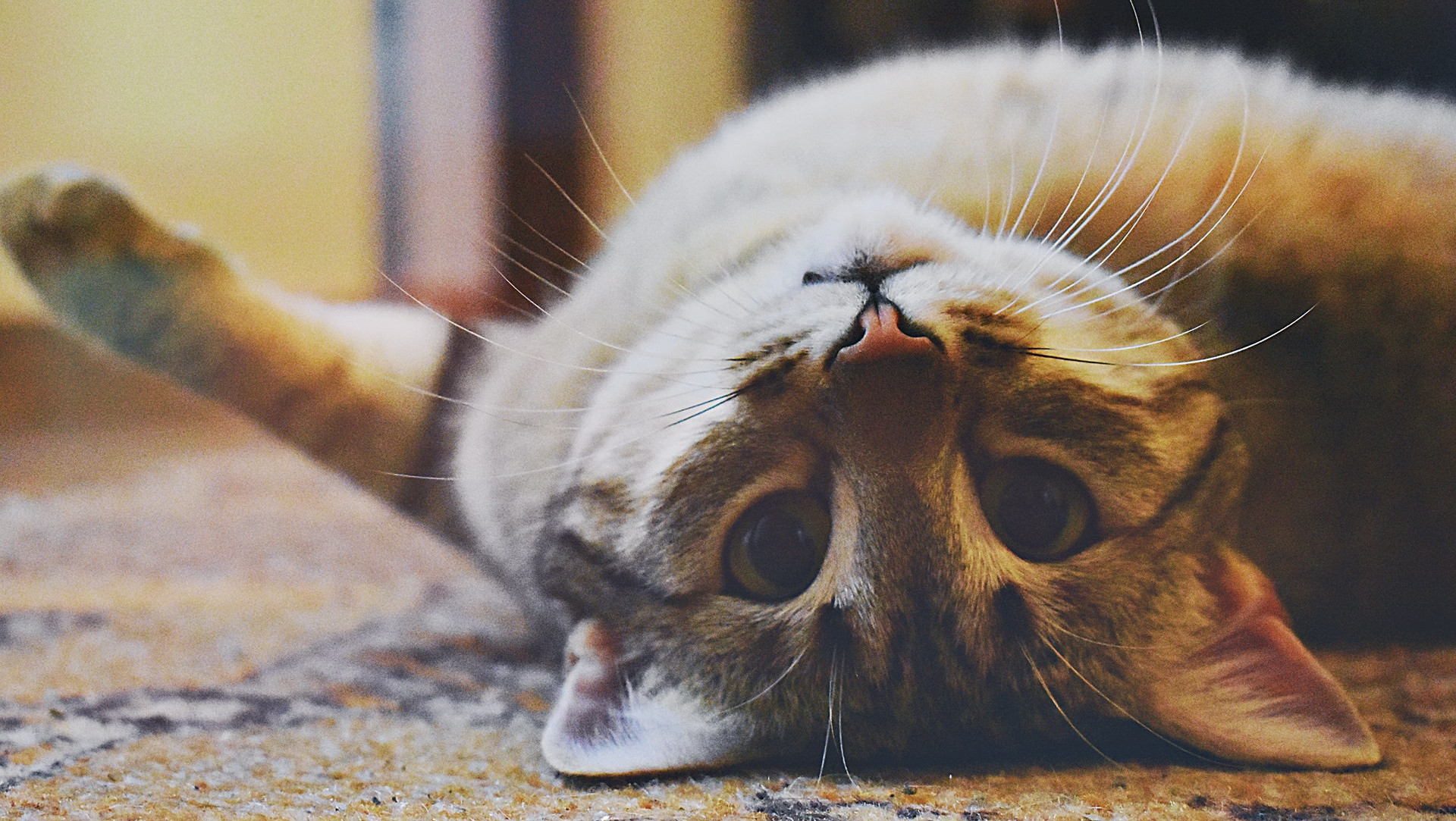10 Instagram Accounts Every Cat Lover Should Be Following