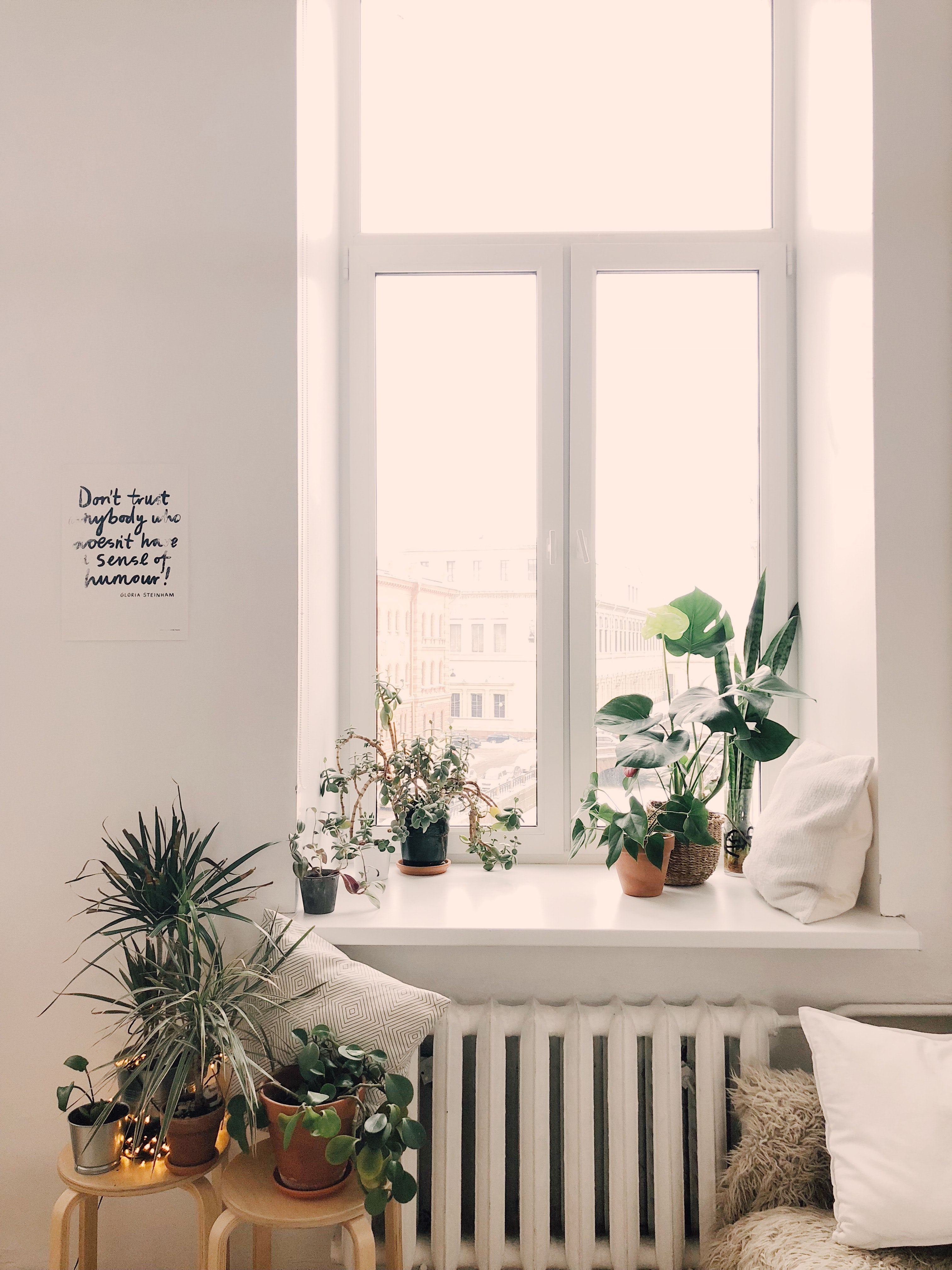 The Beginners Guide To Setting Up An Indoor Garden
