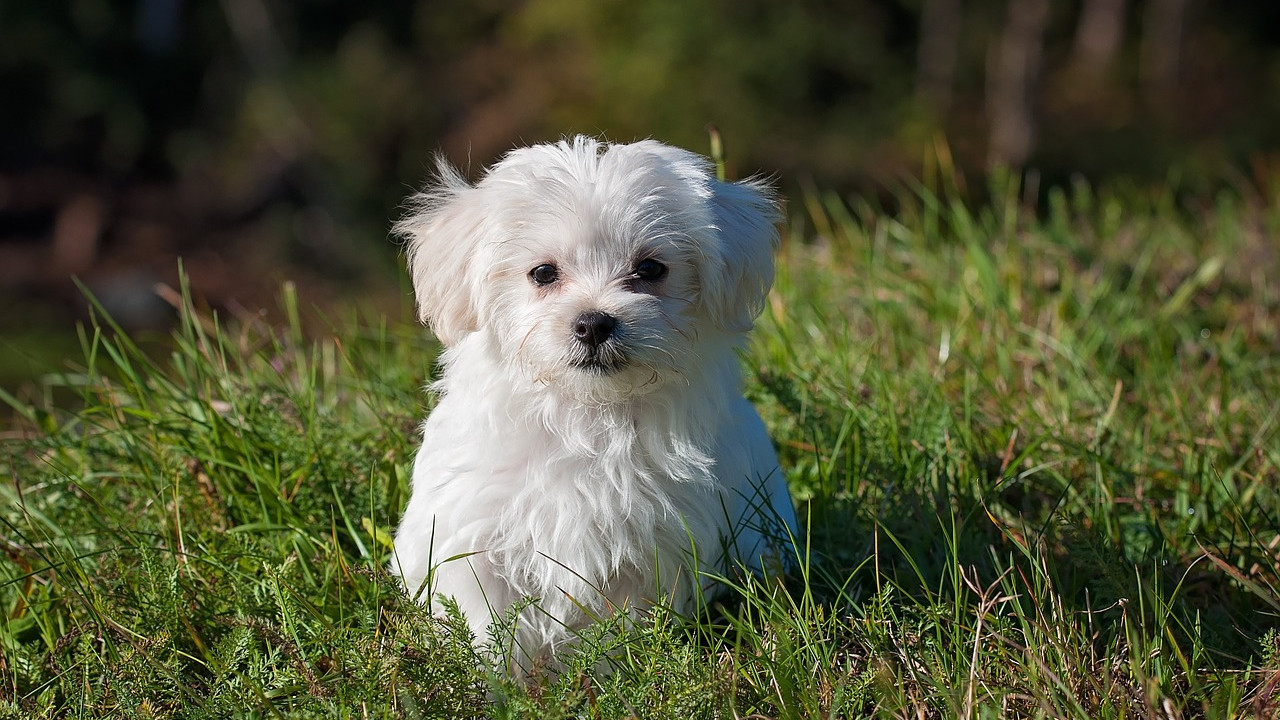 Bringing Home A New Puppy? Here's How To Get Your Home Ready