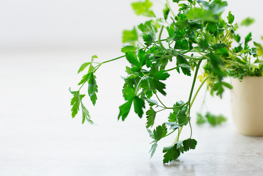 These are the easiest herbs to grow indoors - Easiest herbs to grow indoors ...
