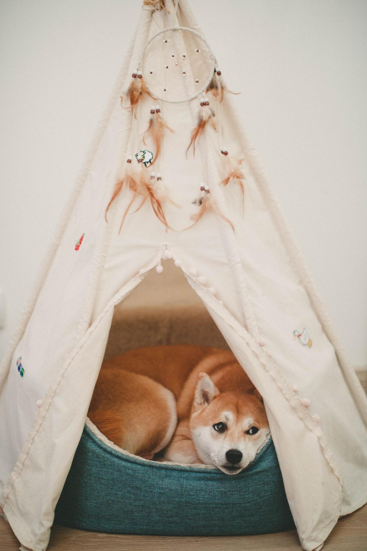 une maison assez adaptée à votre chien