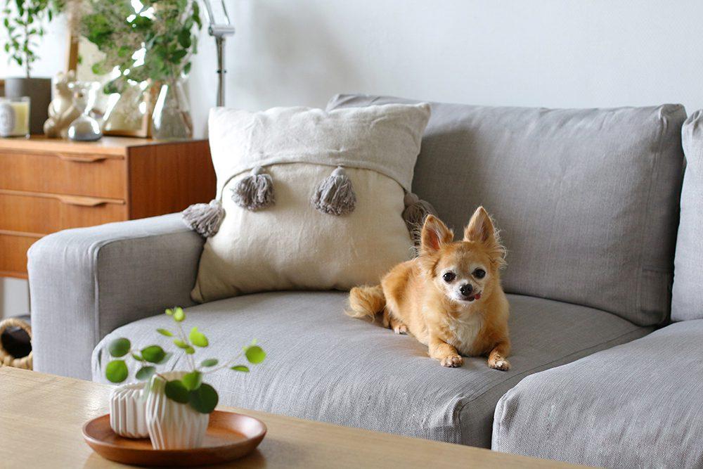 dog-on-muji-wide-arm-kino-ash