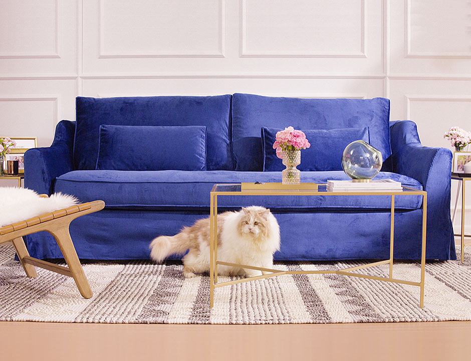 Sofa covered with blue velvet fabric