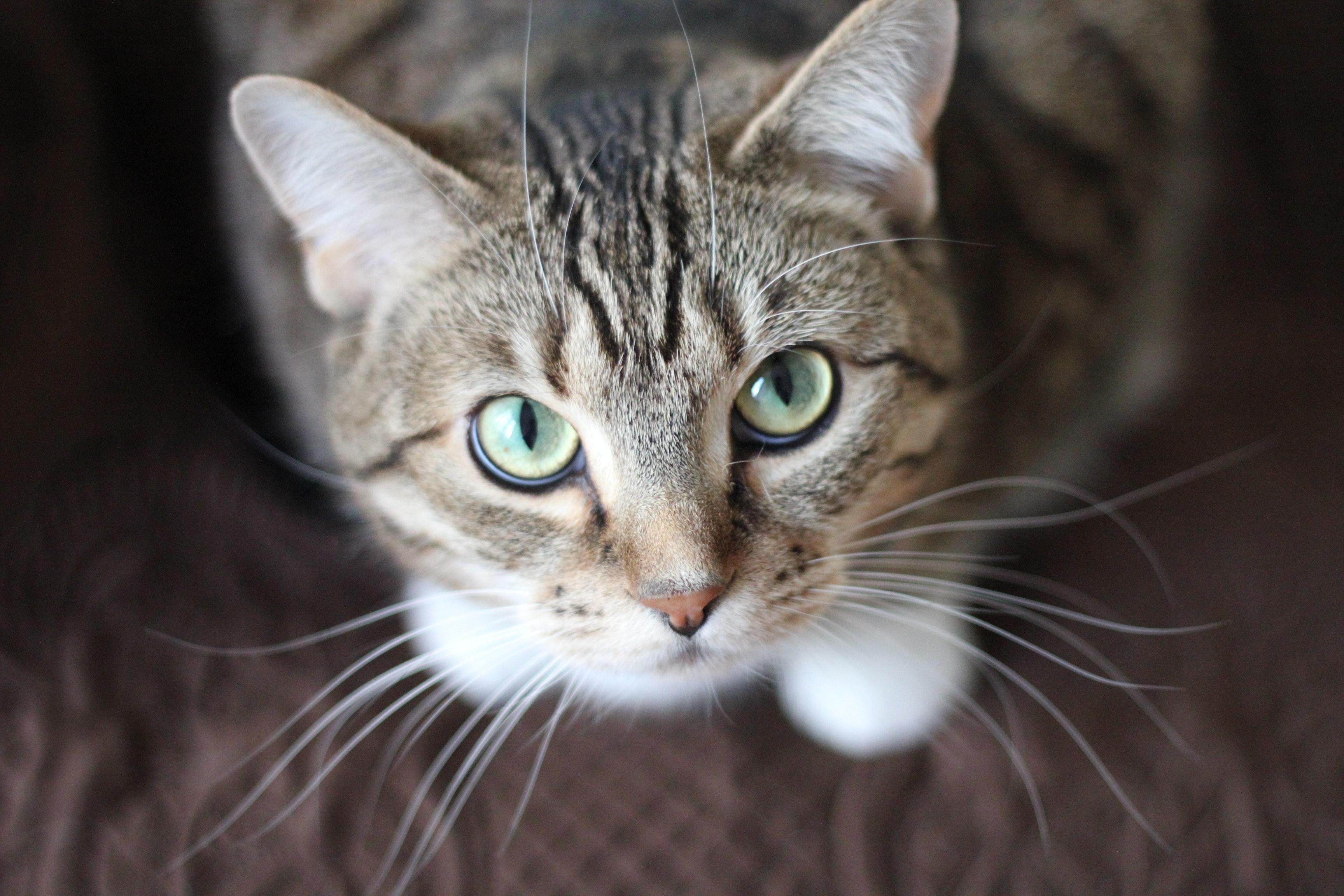 beautiful cat adoption stories
