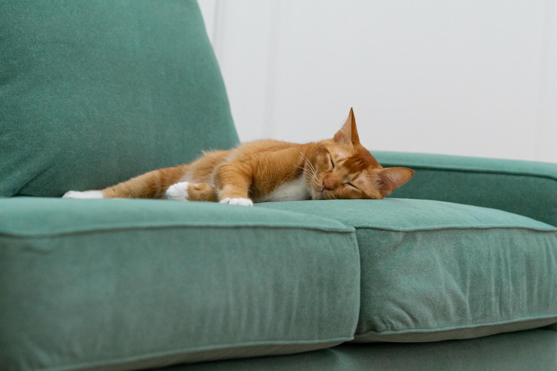 Katze schläft auf einem Claw-proof Velvet Moss Sofa