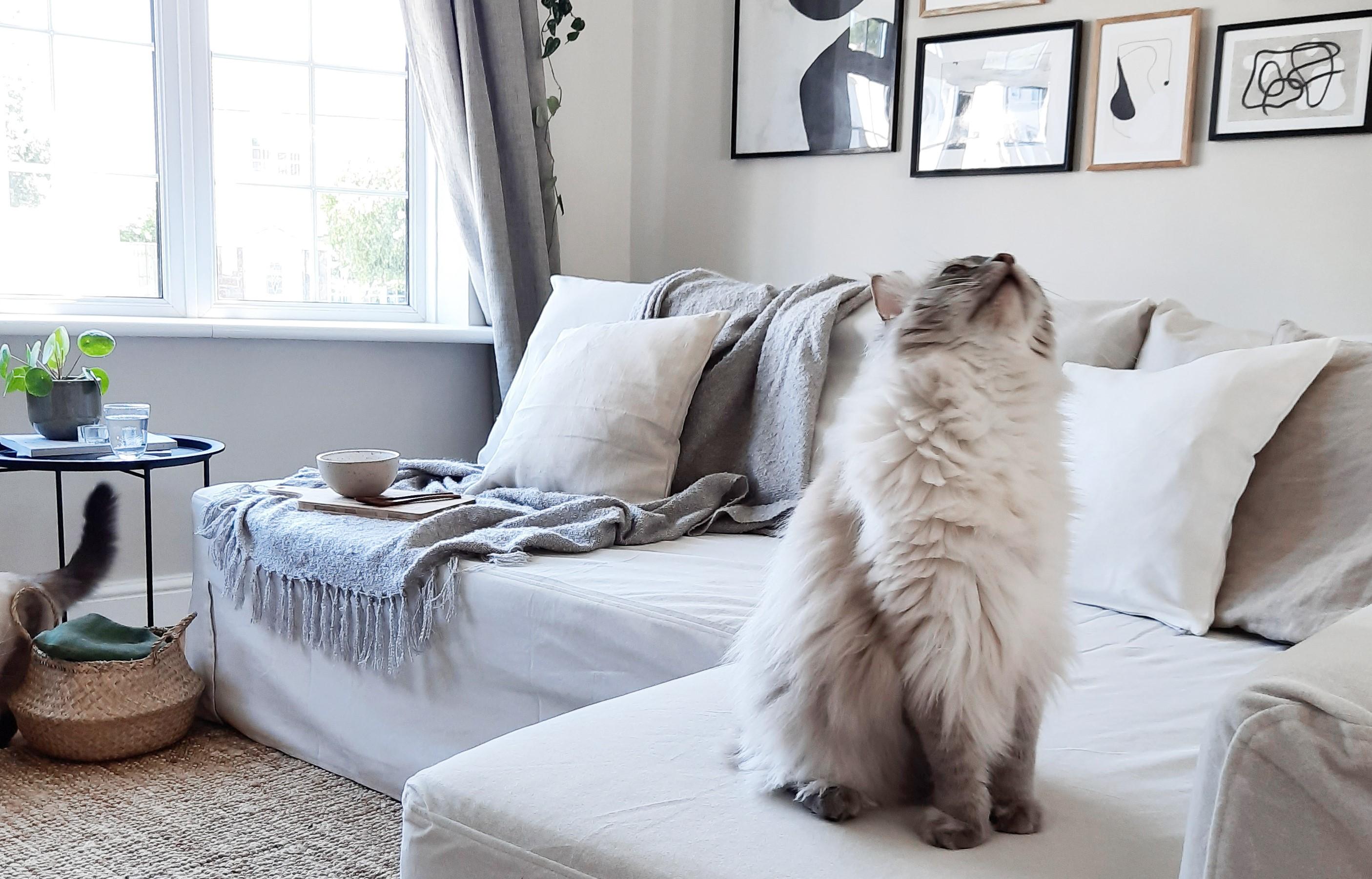 Der große Guide, um deine Sofabezüge lange sauber zu halten