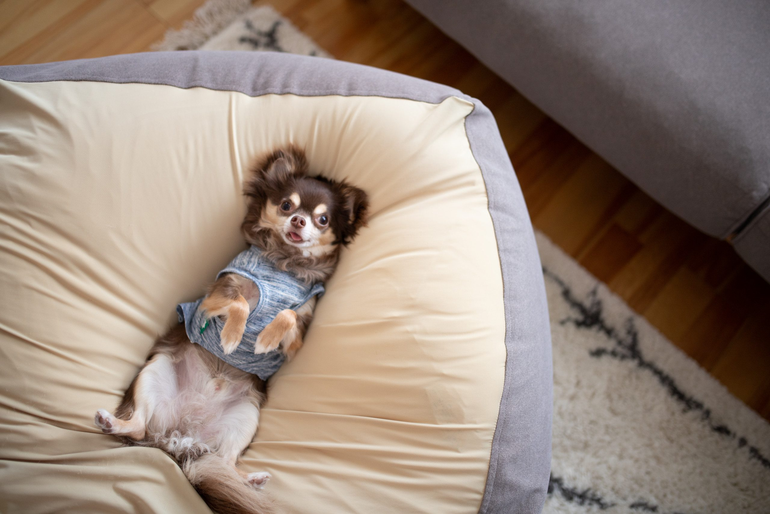家族みんなに愛される座り心地。ペットも気に入る体にフィットするソファ