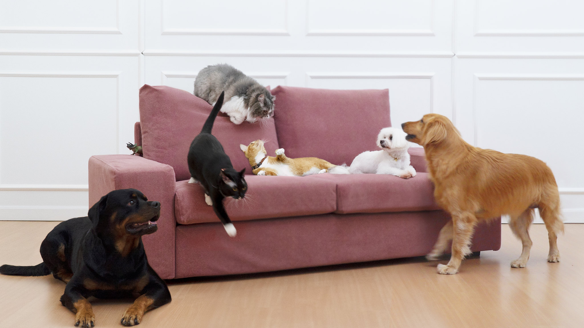cats and dogs on velvet couch