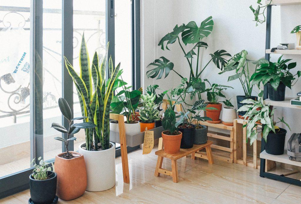 夏のボーナスどう使う? お家時間を楽しく彩るボーナスの使い方。インテリアとしても映える観葉植物をこだわりの鉢植えに変えればインテリアに程よいアクセントを与えます。