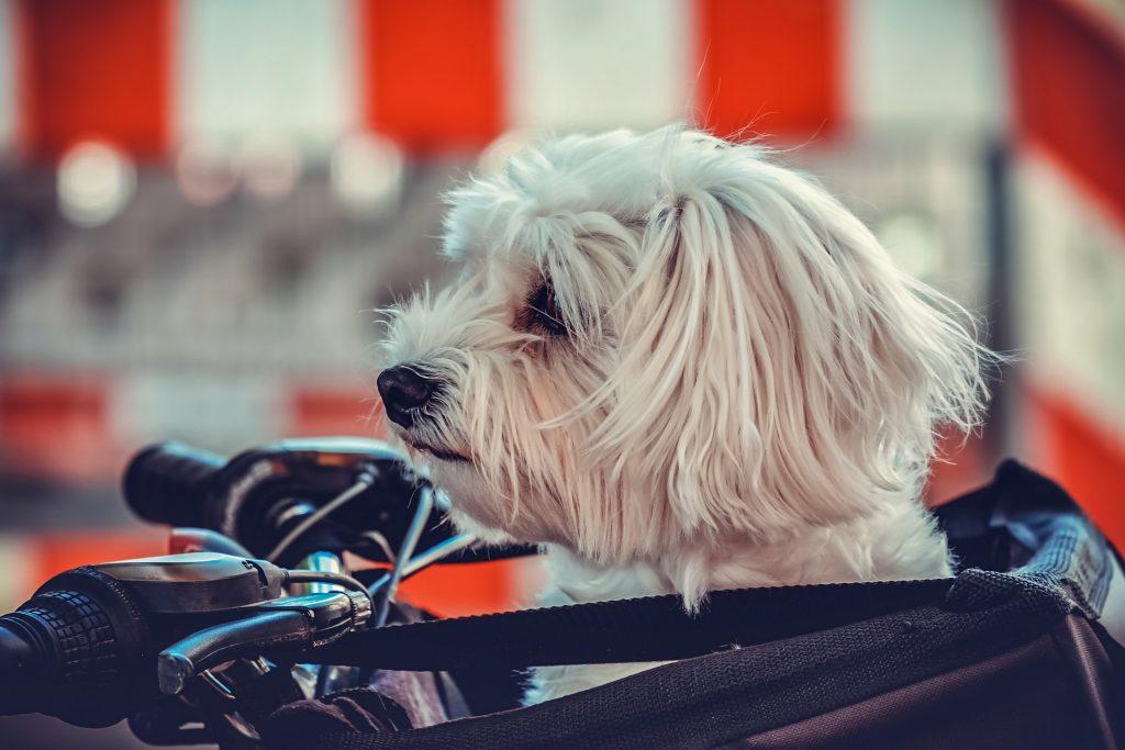 ペットを飼うときは、移動の際に必ず必要なペットキャリーをぜひご用意ください。自分の生活とペットの快適さを考えて選ぶのがポイントです。