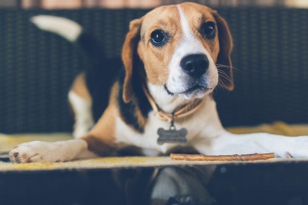 ペットを飼うときには、ネームプレートを用意しましょう。迷子や災害などもしもの時に安全性がぐんと上がるので絶対につけてほしいアイテムです。