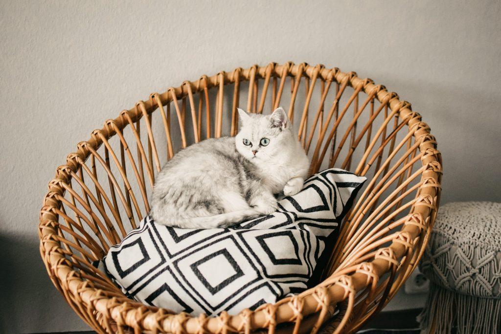 ラタン製のベッドやソファはペットベッドに。湿度調整に優れいているのでペットの快適さはもちろん、デザインもおしゃれでインテリアの要になるアイテムです。