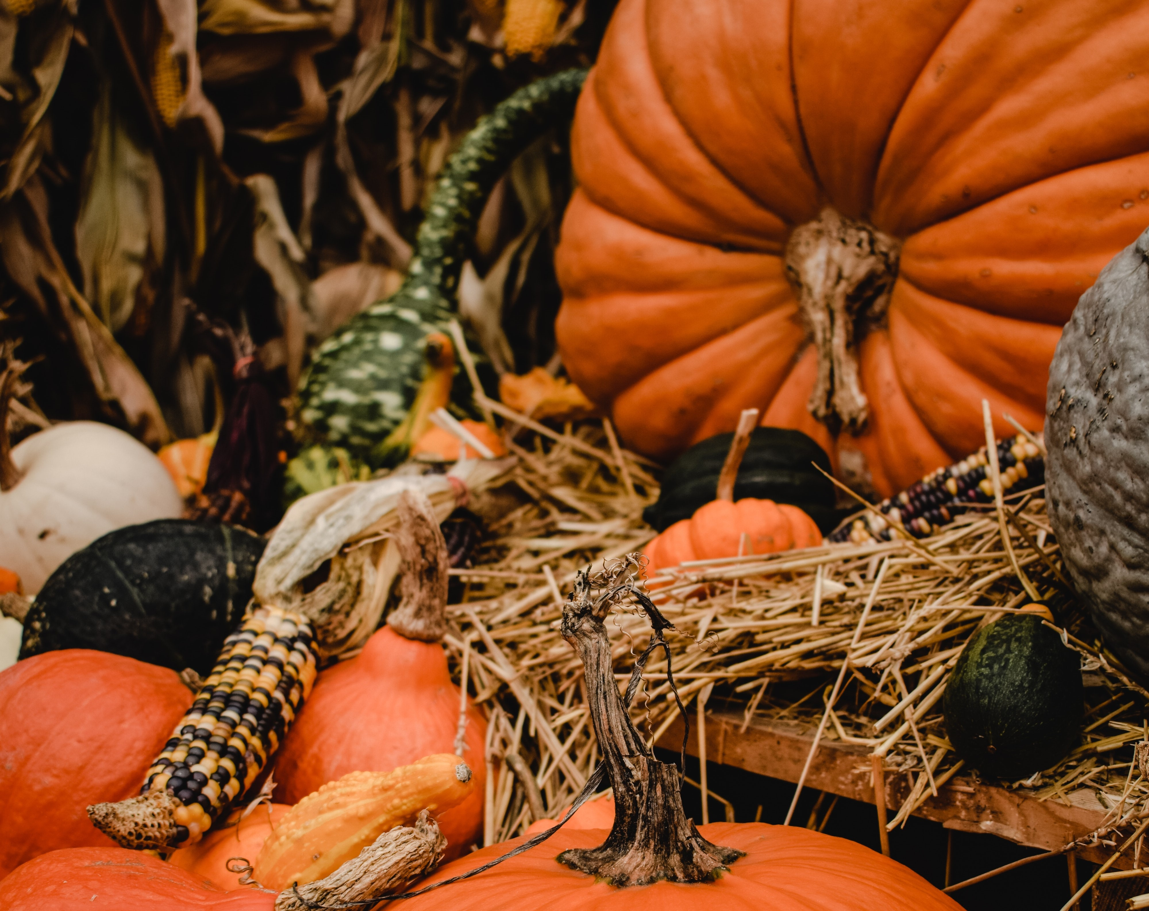 Natural Fall decoration pumpkins corn husks dried leaves
