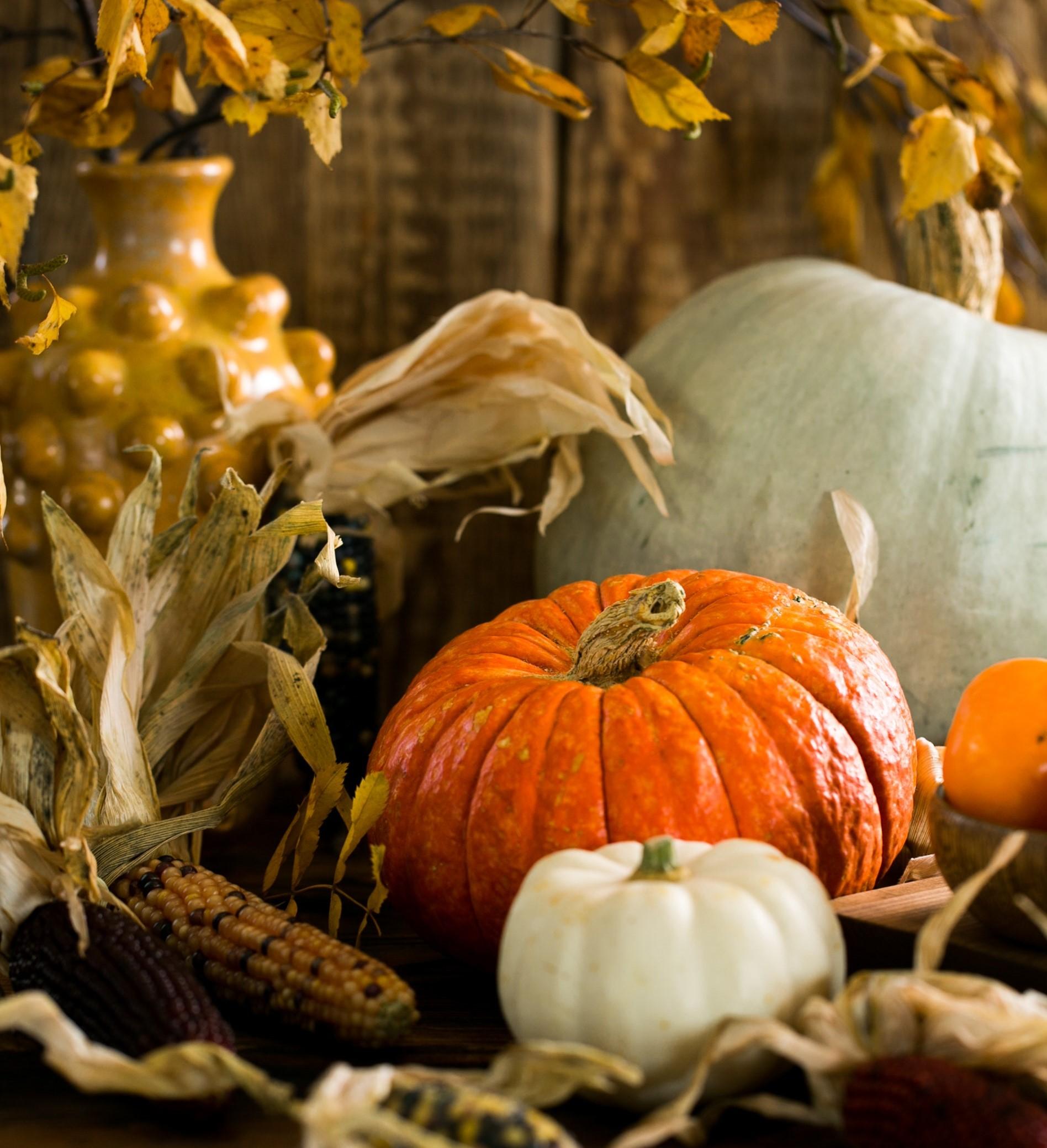 weiße und orangefarbene Kürbisse sind eine tolle Herbst Dekoration