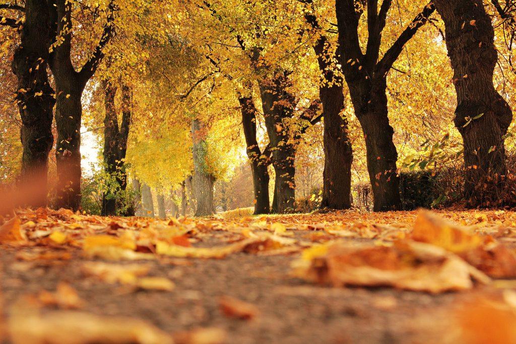 秋のインテリアコーディネートのポイントは色使い。家の中が紅葉しているような黄色やオレンジ、暖色を使いましょう。